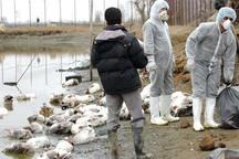 آنفلوانزای فوق حاد پرندگان مربوط به فصل خاصی نیست
