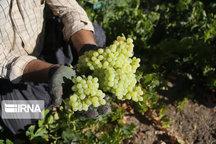 بیش از ۳۰ میلیون دلار محصولات کشاورزی سمنان صادر شد