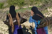 چشمه  ها هم خشکید  عشایر گچساران با کمبود آب روبه رو هستند