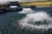 ۲۷ مزرعه پرورش ماهی در آذربایجان شرقی مکانیزه شد