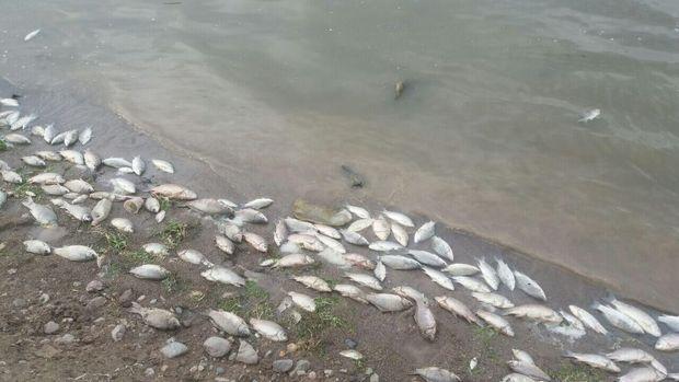 مرگ مشکوک ماهیان قنات جهانی حسن آباد یزد