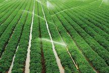 سامانه آبیاری نوین در 822 هکتار اراضی کشاورزی ساوه ایجاد شد