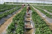 ویلاهای تخریب شده در پردیس به گلخانه تبدیل میشوند