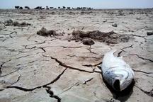 احیای تالاب هامون از مهمترین برنامههای دولت است
