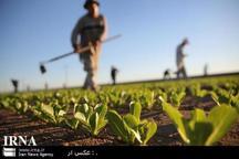 تغییر الگوی کشت در خوزستان ضروری است