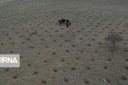بذرپاشی مشارکتی در ۱۰۰ هکتار از اراضی آبیک انجام شد