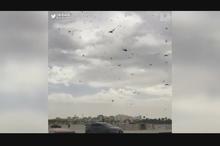 تصاویر دلهره آور حمله ملخها به منامه !