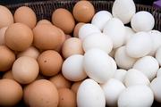 قیمت هر شانه تخم مرغ ۲۰ هزار تومان شد