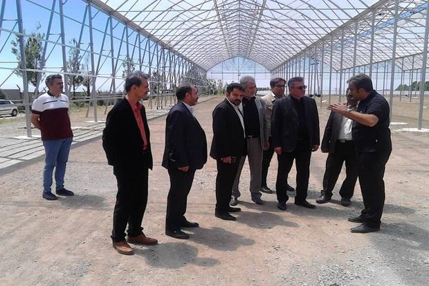 طرح توسعه واحد گلخانه گل رز در آبیک افتتاح می شود