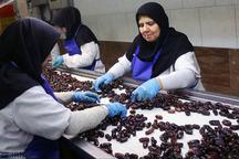 214 واحد صنایع تبدیلی در سیستان و بلوچستان فعال است