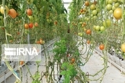 ۱۵۰ میلیارد ریال برای ساخت گلخانه در میرجاوه هزینه شد