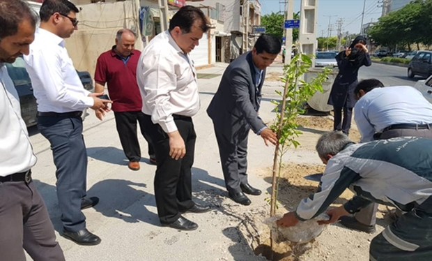 کاشت لیمو و نارنج در شهر بوشهر آغاز شد