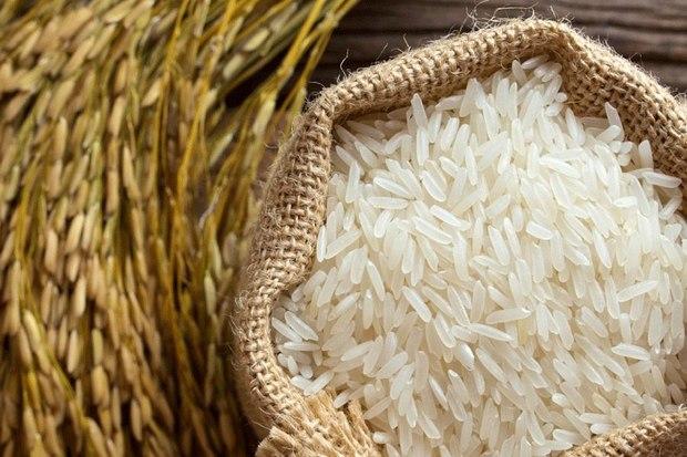 پیش بینی افزایش تولید یکی از با کیفیت ترین برنج های کشور