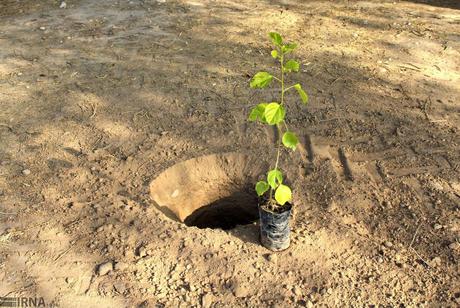 کاشت یک هزار درخت در ارتفاعات گلانغرب توسط همیار طبیعت