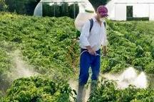 مبارزه با آفات کشاورزی در مزارع تایباد