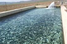 یک طرح پرورش ماهیان سردآبی در سلسله بهره برداری شد