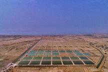 استانداردسازی تولیدی میگوی پرورشی در استان بوشهر مدیریت شود