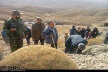 کشت گیاهان دارویی در افزایش رونق اقتصادی استان سمنان تاثیرگذار است