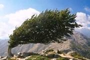 وزش باد شدید و بارشهای پراکنده پدیده غالب جوی ایلام