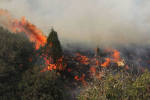 جنگل های خشک گلستان مستعد آتش سوزی است