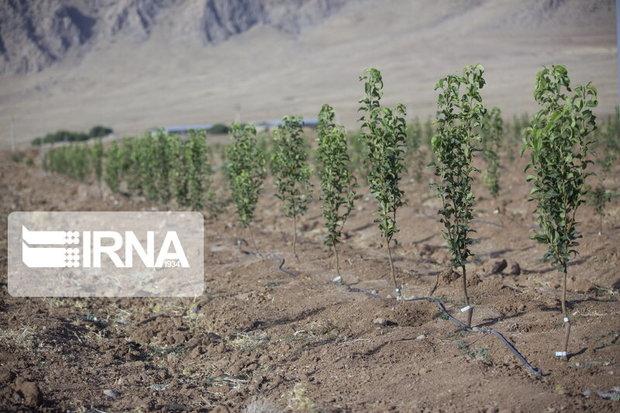 ۵۶۰ هزار اصله نهال در استان مرکزی کاشته میشود
