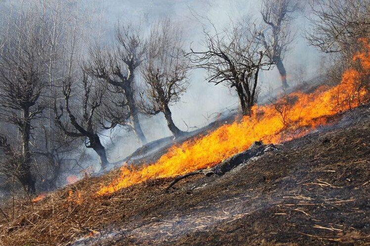 مهار آتش در جنگل های بلوط چهارمحال و بختیاری
