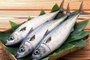 قیمت ماهی سفید دریایی کیلویی 140 هزار تومان