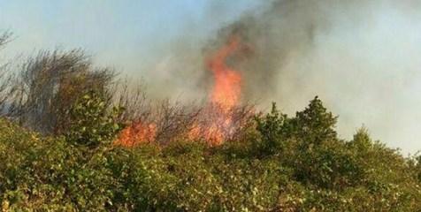 آتش سوزی جنگل ارسباران عمدی بوده است
