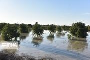 خسارت بارندگی به کشاورزی خمین ۱۳ میلیارد و ۷۰۰ میلیون ریال برآورد شد