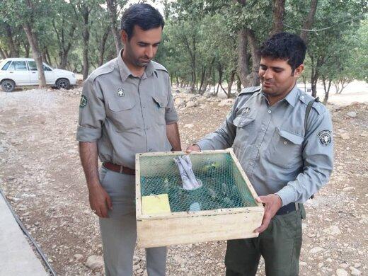 صیاد متخلف زنده گیری پرنده در شهرستان کوهرنگ دستگیر شد