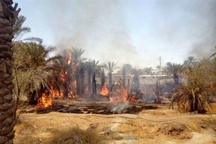 آتشسوزی در نخلستانهای کهنوج   30 اصله نخل سوخت