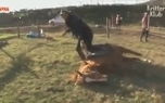 اسبی که خودش را به مردن میزند!
