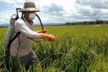 مبارزه با علف های هرز مزارع گندم استان اردبیل آغاز شد