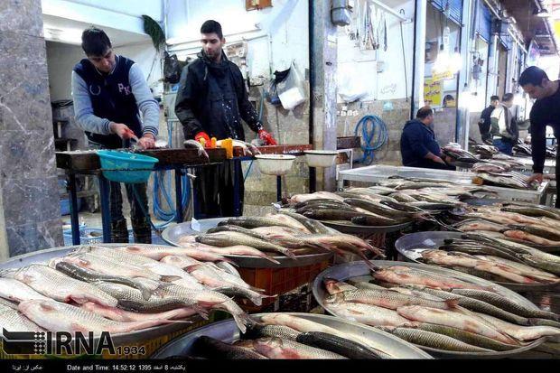 رونق دورهگردی فروش ماهیان پرورشی در مازندران