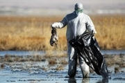موردی از آنفلوانزای فوق حاد پرندگان در آذربایجان غربی گزارش نشد