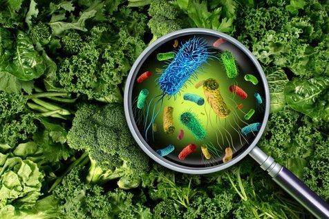 مسمومیت غذایی را چگونه درمان کنیم؟