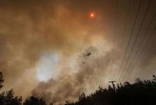 افزایش تلفات آتش سوزی مهیب جنگل ها در ترکیه+تصاویر