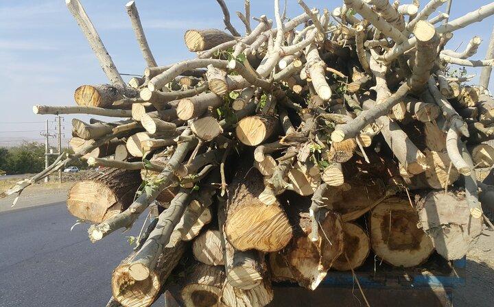 نقش قاچاق چوب در آتش سوزی جنگل های گلستان