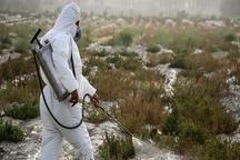 سمپاشی ۱۱۷ هزار هکتار از اراضی استان برای مقابله با ملخ