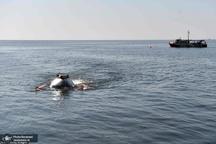 عکس/ سفر پوتین به اعماق دریا