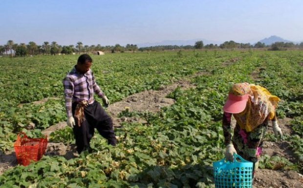 صنایع تبدیلی حلقه مفقوده کشاورزی پلدختر