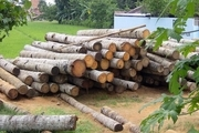 کشف ۱۵ اصله چوب قاچاق در اردبیل