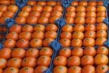 120 تن میوه شب عید در تویسرکان تامین شد