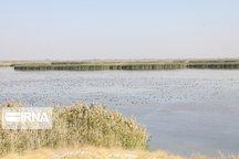 فرود بیش از ۳۰ هزار قطعه پرنده مهاجر در تالاب «کانیبرازان» مهاباد