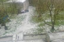 بارش تگرگ به 12 روستای تکاب خسارت زد
