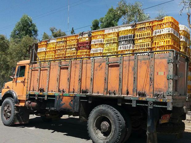 خروج غیرقانونی 22 تن مرغ زنده توسط پلیس متوقف شد
