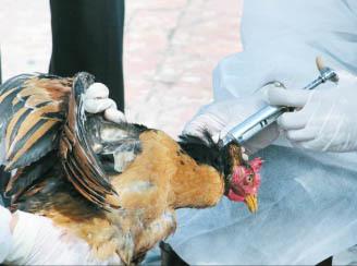 نگاه پیشگیرانه برای مقابله با آنفولانزای پرندگان