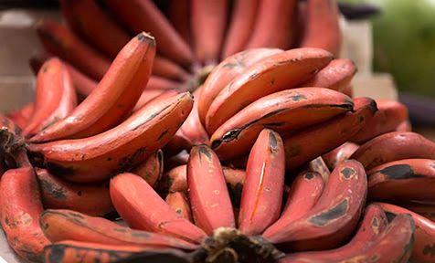 ماجرای ورود موز قرمز به بازار ایران چیست؟/ قیمت موز قرمز چقدر است؟