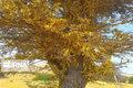 هشدار هجوم مجددملخ صحرایی به مناطق جنوبیسیستان و بلوچستان