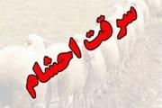 دستگیری ۳  سارق احشام با ۲۸ فقره سرقت در دورود